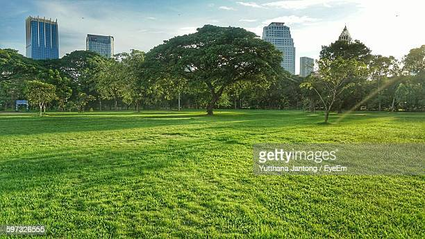 Trees Growing At Lumpini Park Against Sky In City