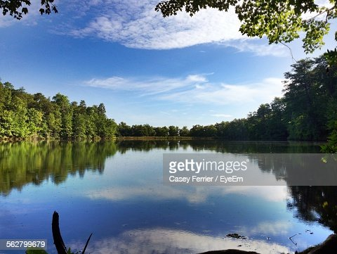 Trees Growing By Calm Lake Against Sky