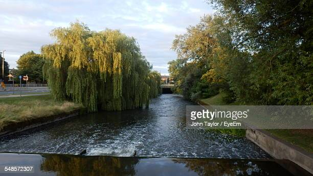 Trees Growing By Canal Against Sky