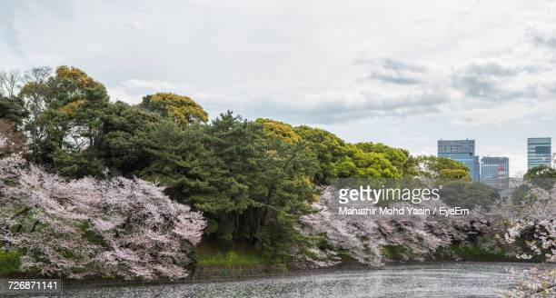Trees Growing By Lake At Chidori-Ga-Fuchi