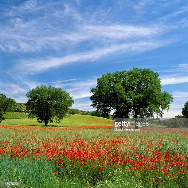 Trees growing in field of flowers