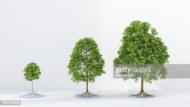 Trees growing in petri dish