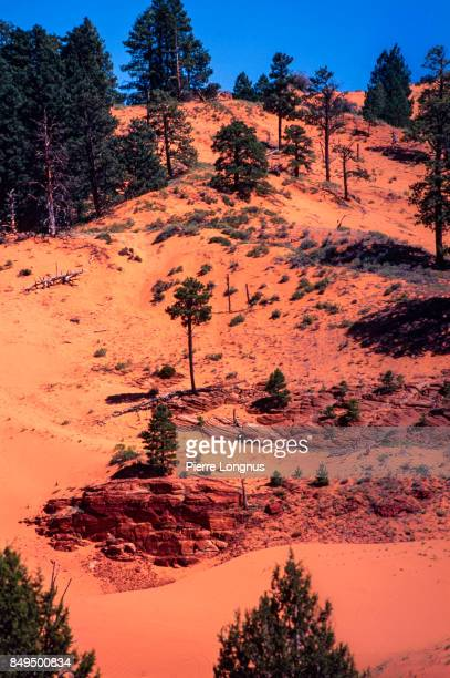Trees growing in Sand Dunes - Coral Pink Sand Dunes State Park - Utah, USA