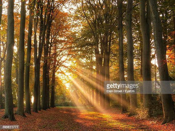 Trees Growing On Field During Autumn At Morning