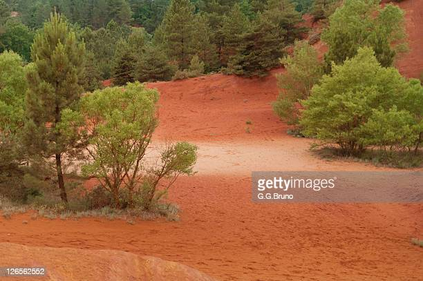 Trees growing on red clay soil