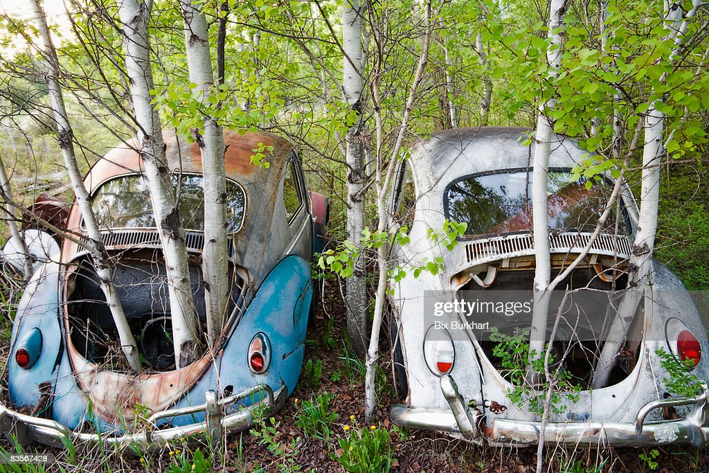 Trees growing through abandoned cars : Stock Photo