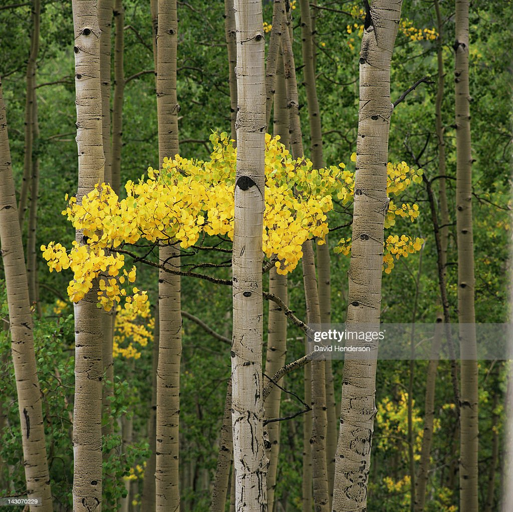 Trees growing together in forest : Stock Photo