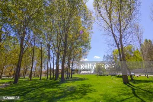 trees high on a green meadow : Stock Photo