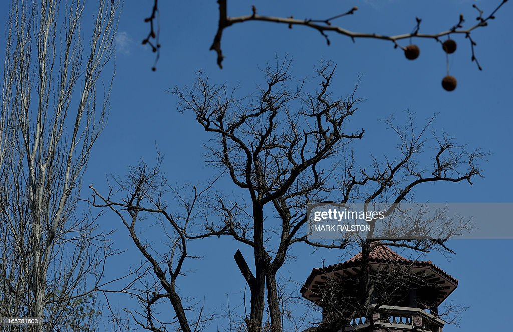 Trees in a city park at the recently renovated historic foreign concession area of Tianjin on April 6, 2013. The city has almost completed a program of restoring its foreign buildings to their former condition. AFP PHOTO/Mark RALSTON