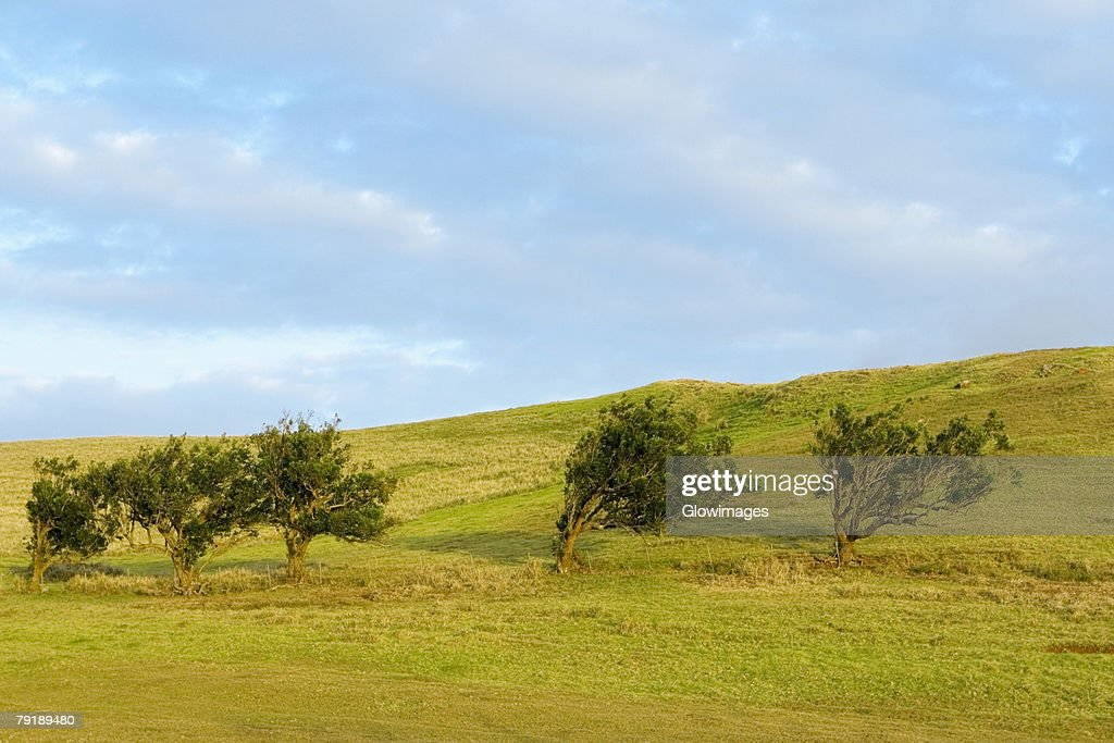 Trees in a field, Pakini Nui Wind Project, South Point, Big Island, Hawaii Islands, USA : Stock Photo