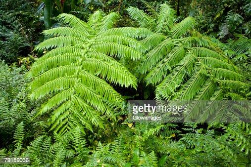 Trees in a forest, Akaka Falls State Park, Big Island, Hawaii Islands, USA : Foto de stock
