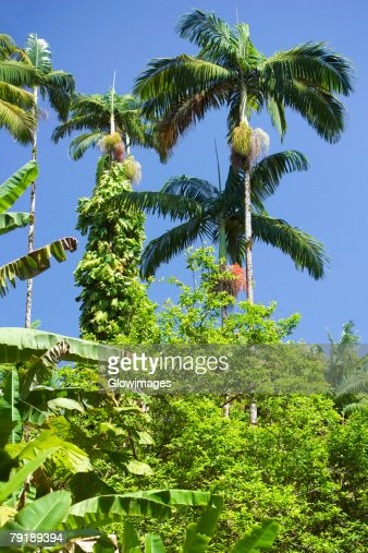 Trees in a forest, Hawaii Tropical Botanical Garden, Hilo, Big Island, Hawaii Islands, USA : Foto de stock