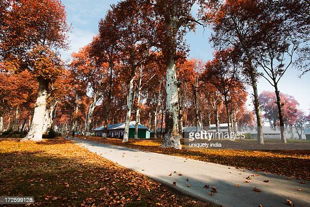 Trees in a garden, Naseem Bagh, Srinagar, Jammu And Kashmir, India
