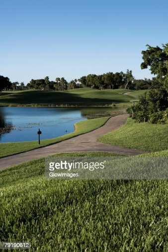 Trees in a golf course : Foto de stock