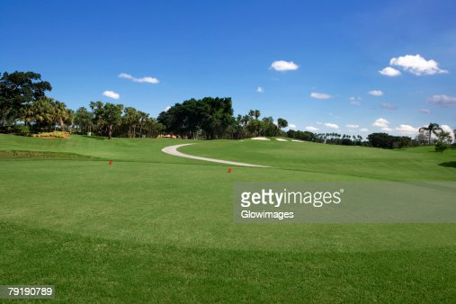 Trees in a golf course : Stock Photo