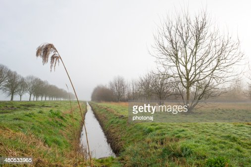 Trees in a hazy morning in winter : Stock Photo