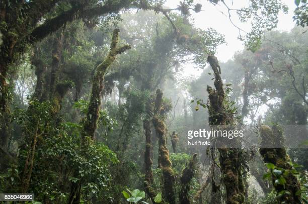 Trees in a misty rain forest on the Barva Volcano in Braulio Carrillo National Park Costa Rica Photo taken 14 November 2011