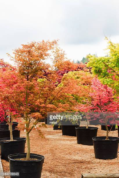 Trees in a Nursery