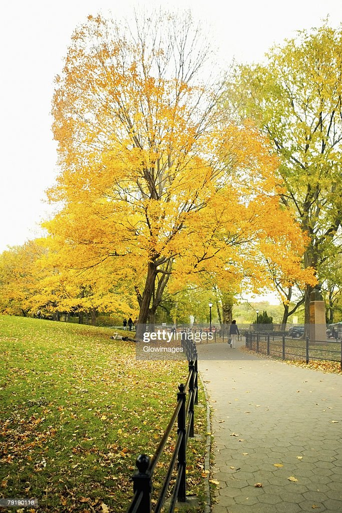 Trees in a park, Central Park, Manhattan, New York City, New York State, USA : Foto de stock