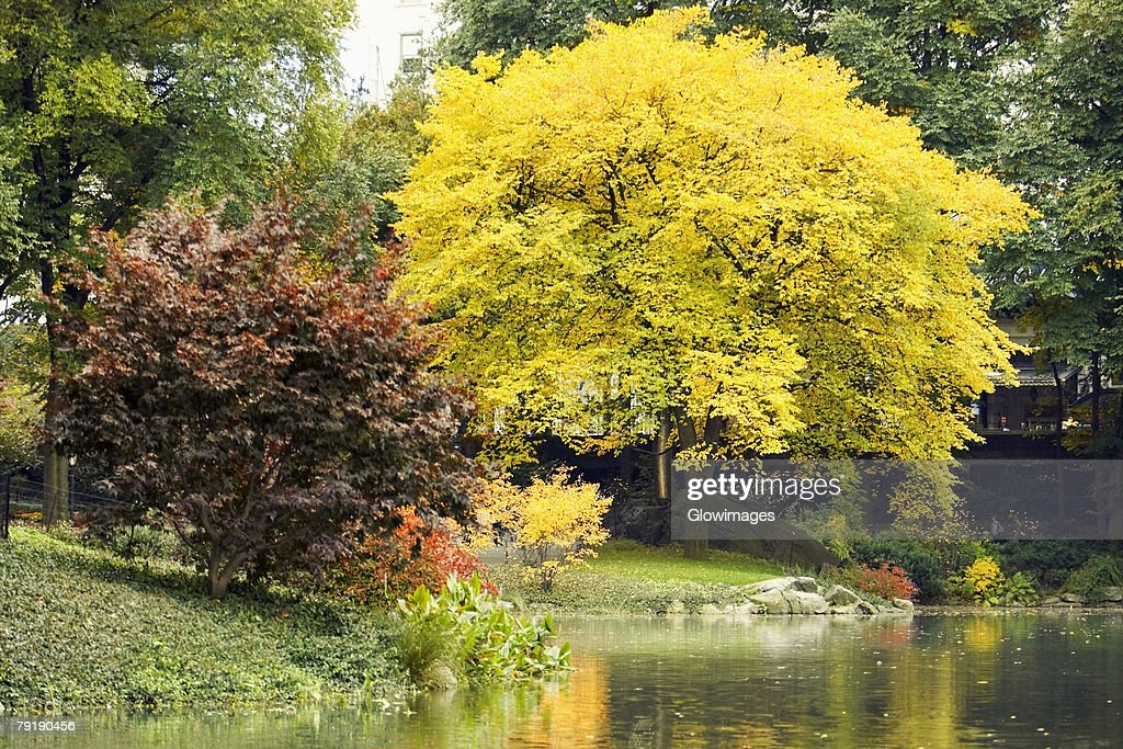 Trees in a park, Central Park, Manhattan, New York City, New York State, USA : Stock Photo