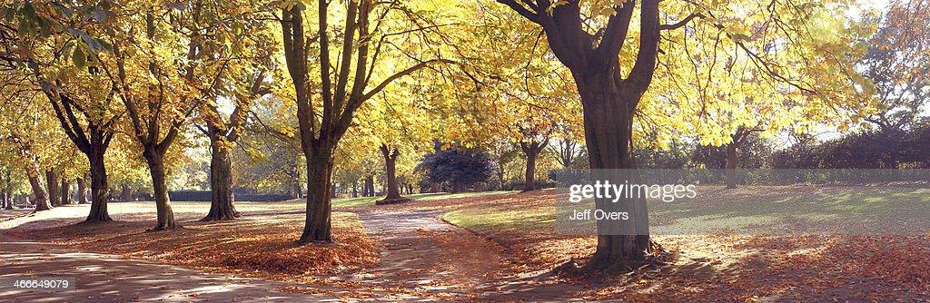 Trees in autumn in Ladywood Birmingham Photo taken autumn 2003 Park parkland