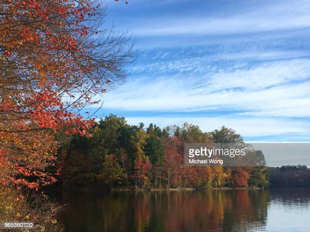 Trees in Autumn turning color on the shore