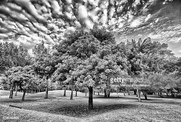 Trees in Chapultepec Park, Mexico City