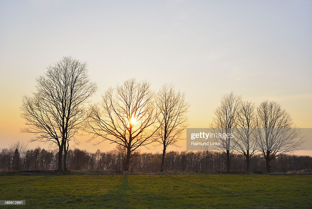 Trees in early Spring at Sunset