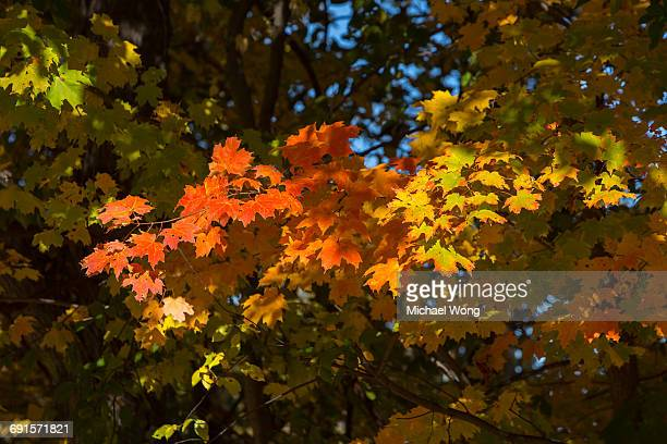 Trees in Fall with colorful foliage