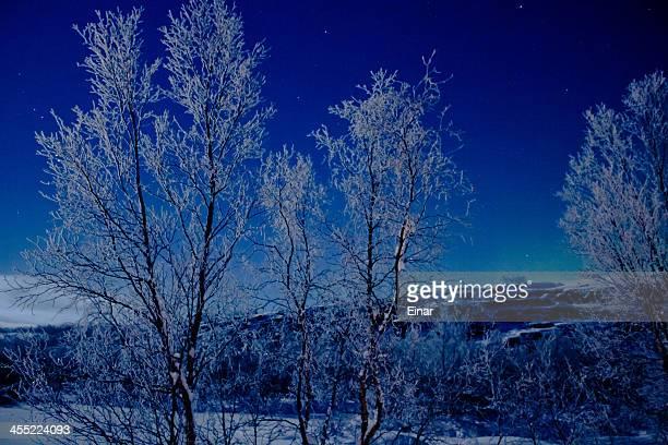 Trees in Finnmark Norway