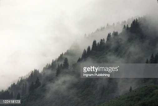 Trees in Fog on Mountain in Austria : Stock Photo