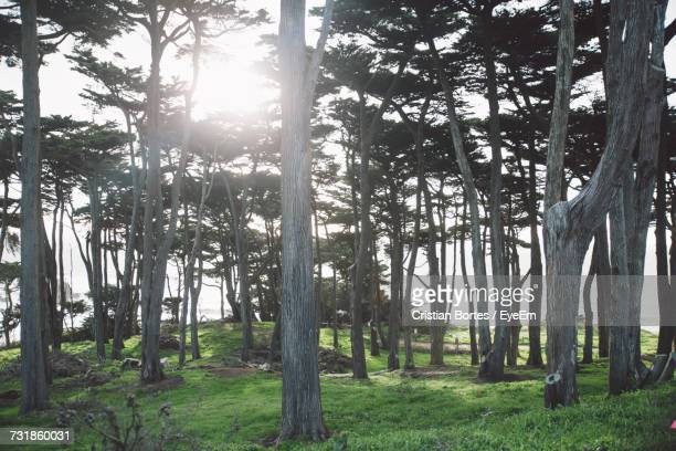 Trees In Forest During Sunny Day