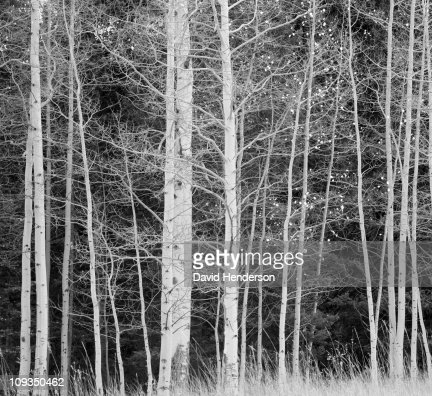 Trees in forest during winter : Stock Photo