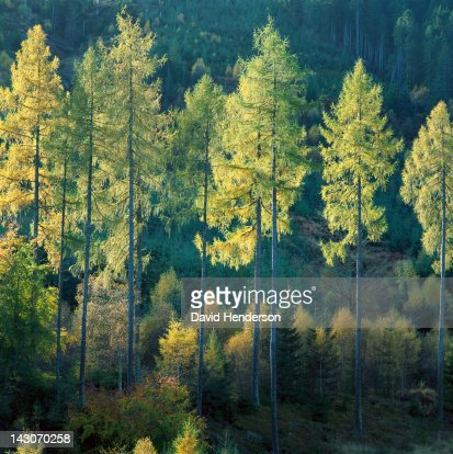 Trees in forest illuminated by sunlight : Stock Photo