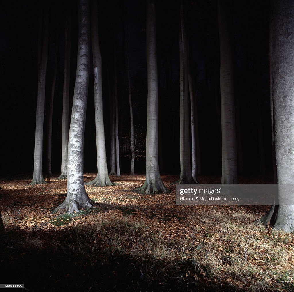 Trees in forest lit up at night : Stock Photo