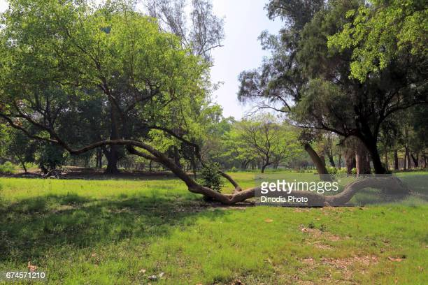 Trees in indian botanic garden, shibpur, howrah, west bengal, indiaasia
