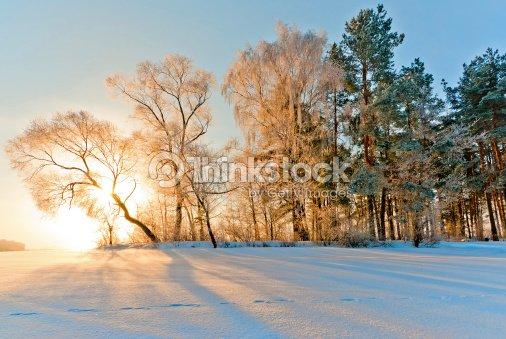 Trees in inei : Stock Photo