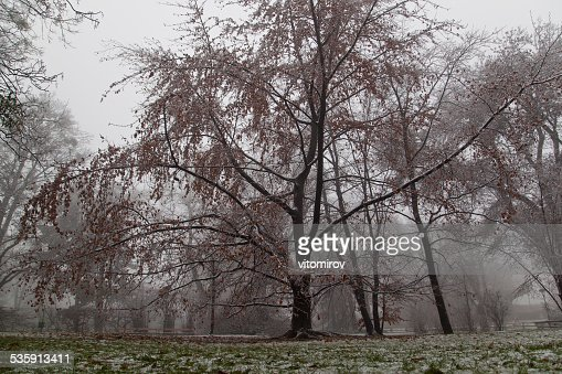 trees in park on winter time : Stock Photo
