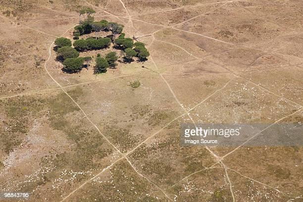 Trees in plain landscape