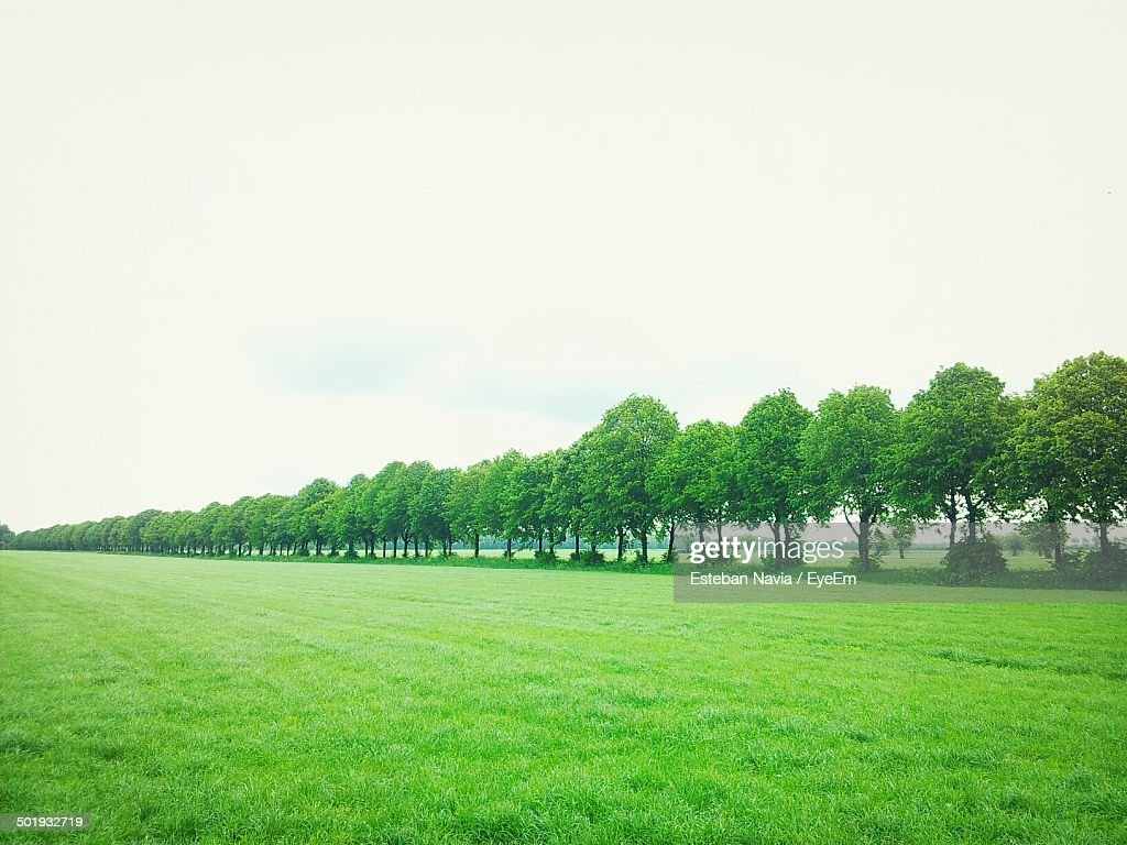 Trees in row on green landscape against sky