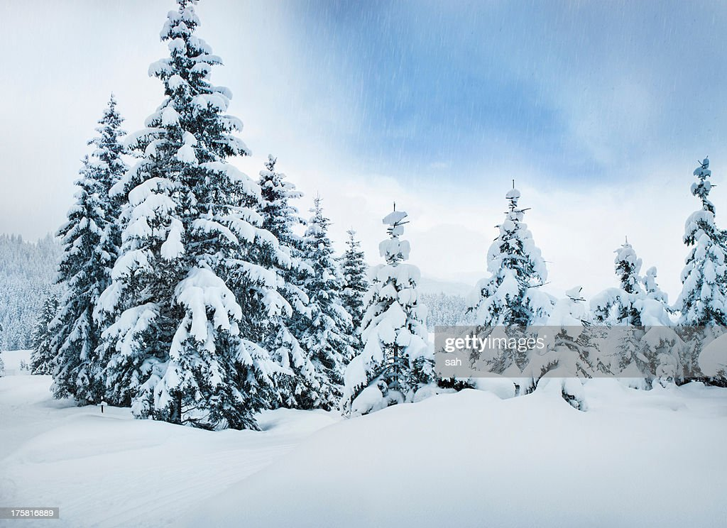 Trees in snow