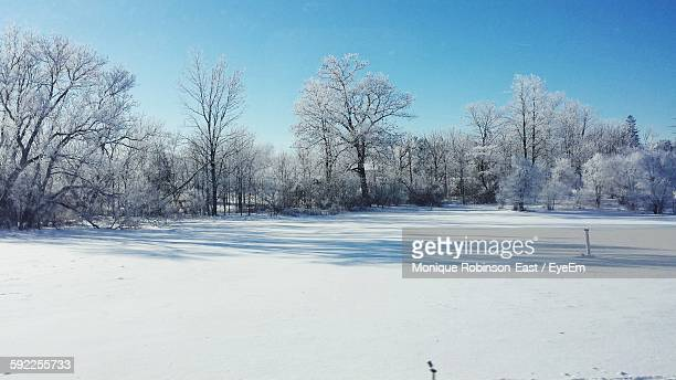 Trees In Snow-Covered Field Against Sky