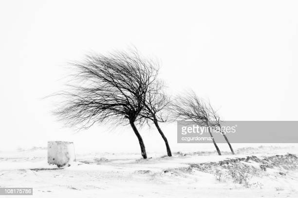 Trees in snowstorm