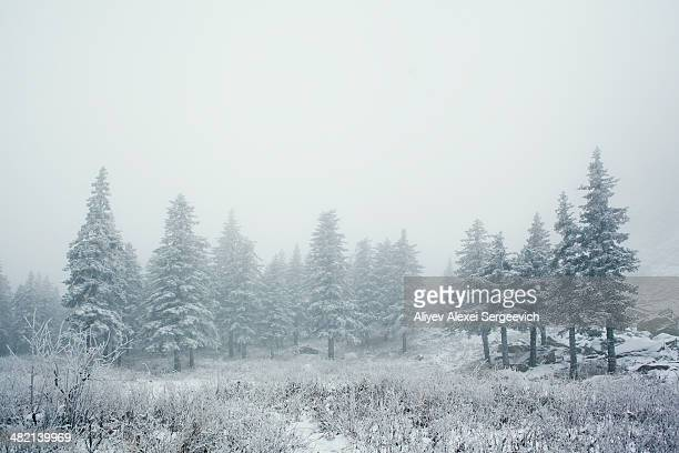 Trees in snowy landscape