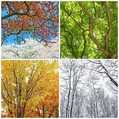 Arbres au printemps t automne et hiver photo thinkstock - Printemps ete automne hiver et printemps ...