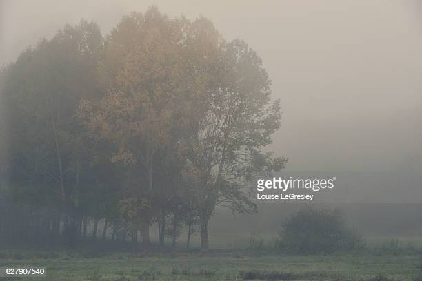 Trees in the distance surrounded by fog on autumn morning