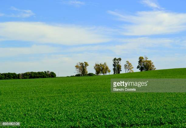 Trees in the field in spring