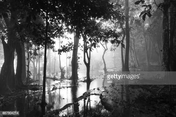 Trees in the mist on the wetlands on top of Kuang Si Falls