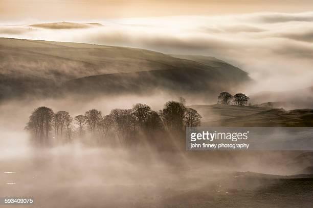 Trees in the mist, peak district landscape