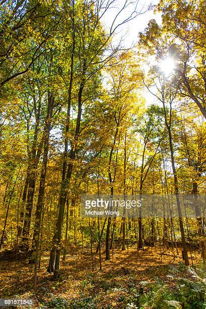 Trees in the woods turning Fall colors